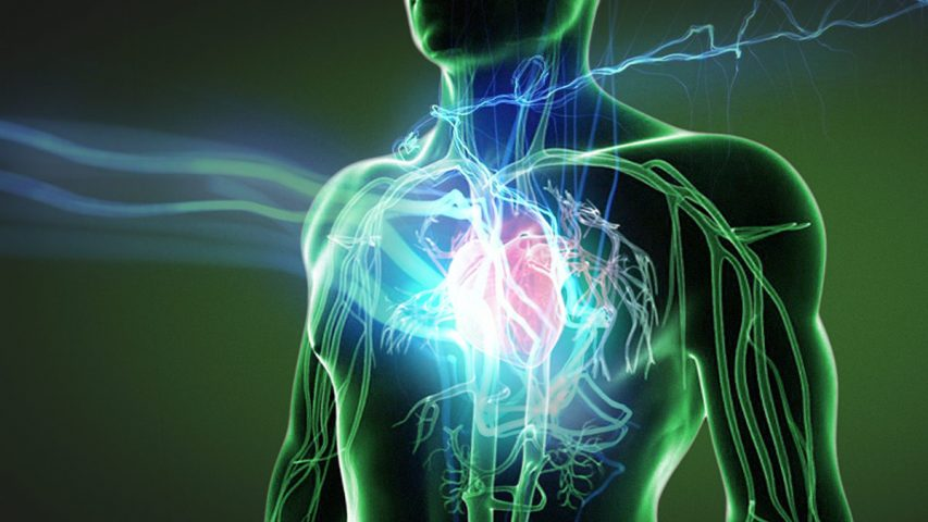 Image result for Cardiovascular Diseases Naturally