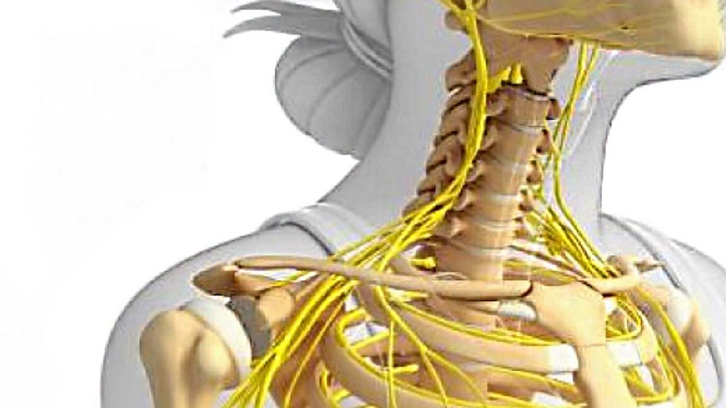 Micronutrients Are Needed For A Healthy Skeletal System Dr Rath